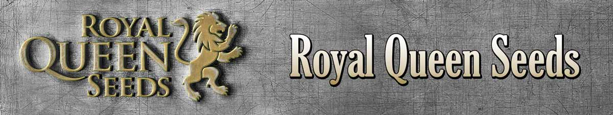 royal queen seeds banner